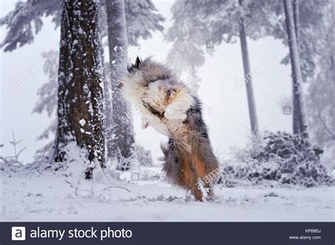 puppy jumping and biting biting wood stock photos biting wood stock images alamy