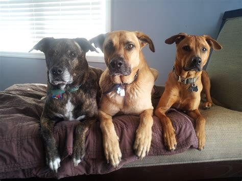 my three dogs developing a common language to set our dogs up to succeed stilwell positively