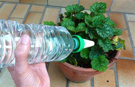 Goutte A Goutte Plante Interieur comment s occuper de ses plantes durant les vacances