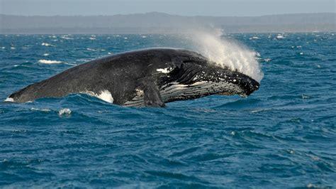 Im Wasser by Wale Und Delfine Tiere Im Wasser Natur Planet Wissen