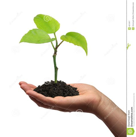 Growing Green growing green plant in a stock image image of