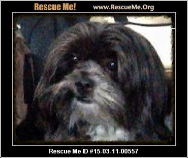shih tzu rescue carolina carolina shih tzu rescue adoptions rescueme org