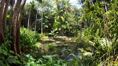 How To Go To Botanic Garden 7 Reasons To Visit Singapore Botanic Gardens Visit Singapore