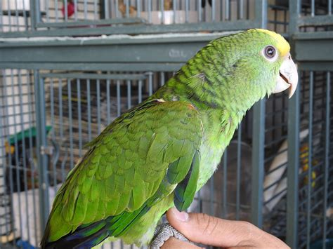 exotic birds for sale hand fed and tame los angeles south bay