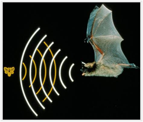 how bats navigate in the dark