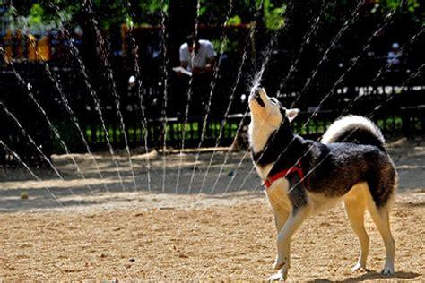 leash guide  nycs  dog runs ny daily news