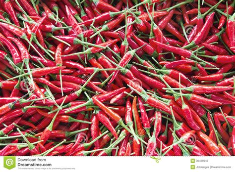 thai chili peppers background royalty free stock photo