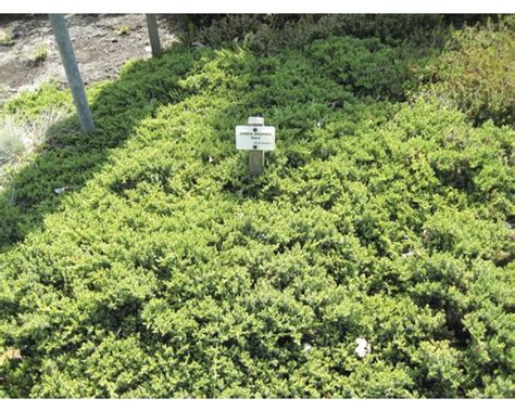Bambus Pflanzen Sichtschutz 780 by Winterharten Pflanzen Sonstige Preisvergleiche