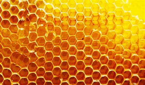 Honey Comb Honeycomb honey encryption deceives hackers with plausible data threatpost the stop for security