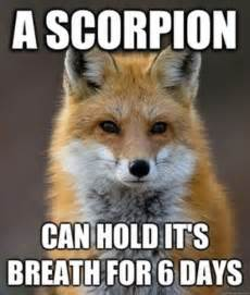 Fox Meme - fun fact fox meme
