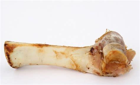 can dogs eat beef bones can dogs eat beef bones rover