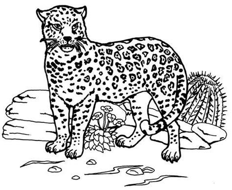 imagenes de bebe jaguar para colorear jaguar 5 animales p 225 ginas para colorear