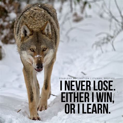 Strong Wolf by 20 Strong Wolf Quotes To You Up Wolf