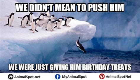 Penguin Birthday Meme - penguin birthday meme 100 images 25 best memes about