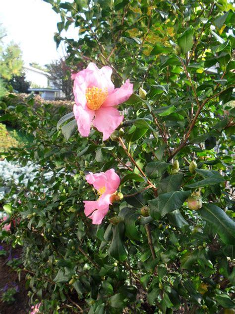 cing co dei fiori vada passeggiare tra parchi giardini e castelli novembre 2014