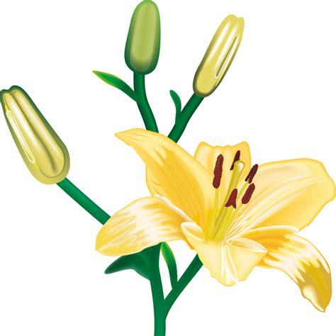 imagenes png tranparentes imagenes de flores transparentes