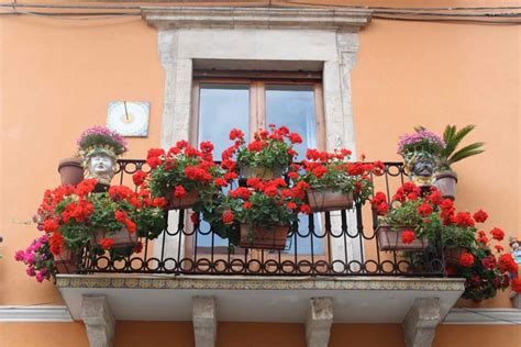 fiori per balconi fiori per balconi fiorista fiori per balconi fiori