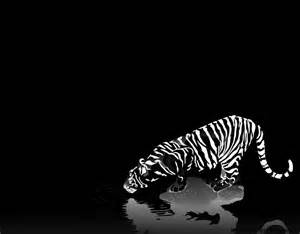 3d style black and white black n white 3d wallpaper 634 image pictures free