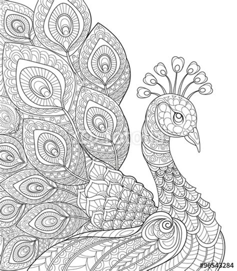 vektor peacock adult antistress coloring page black and