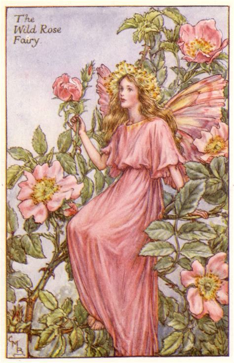 fate dei fiori cicely barker best 20 cicely barker ideas on flower