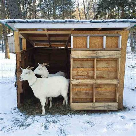 Goat Shed For Sale by Learn How To Build A Goat Shelter Diy Earth News