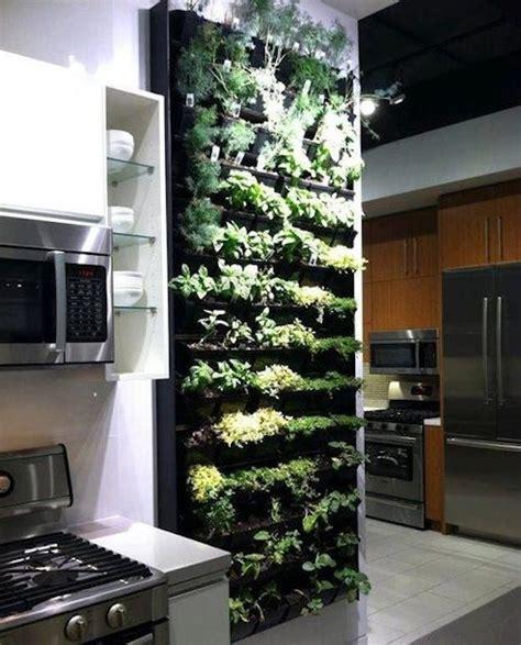 evergreen indoor herb garden herb garden  kitchen