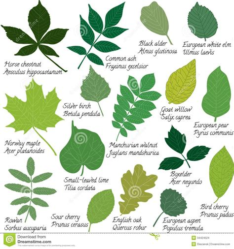 different names different leaves and their names myideasbedroom