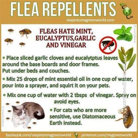 photo by request flea tick remedy 8 oz apple cider