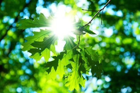 fotos para perfil naturaleza me gusta la naturaleza y te cuento porque ecolog 237 a