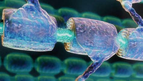 mielina e alimentazione sclerosi multipla attesi i risultati delle staminali