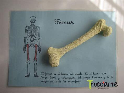 como hacer una maqueta del esqueleto humano como hacer un esqueleto humano con periodico buscar con