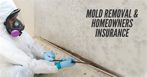 will house insurance cover mold will house insurance cover mold 28 images homeowners insurance water damage and