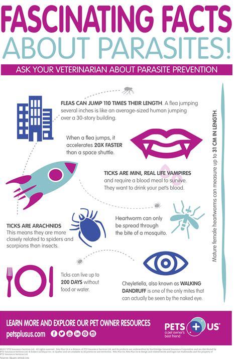 facts about fascinating facts about pet parasites pets plus us