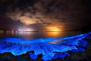 pergola sun shade ideas neon glow in the dark makeup besides butterfly tail betta fish in