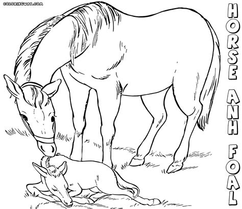 coloring pages of baby horses baby horse coloring pages coloring pages to download and