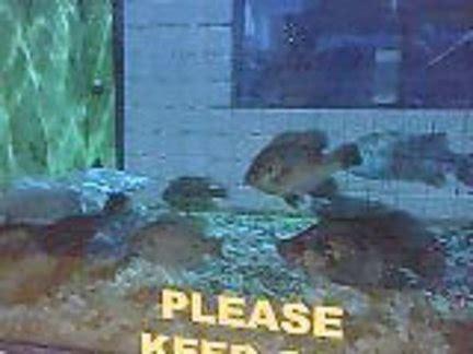 gander mountain utica berkley fish tank open for viewing in gander mountain s parking lot in cicero syracuse