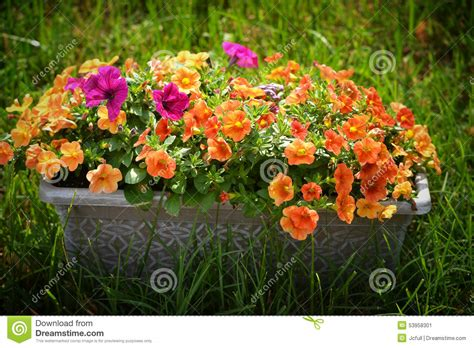 Planter Box Flowers by Planter Box Of Flowers Stock Photo Image 53958301