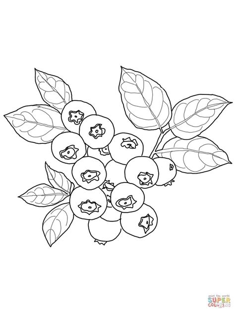 blueberry coloring page supercoloringcom food drink