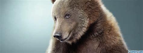 funny bear facebook cover timeline photo banner  fb