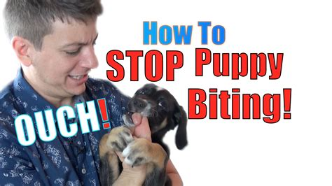 how do you your not to bite how to a puppy not to bite