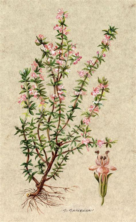 elenco fiori e piante dalla a alla z tutti i fiori dalla a alla z piante e fiori tutti i