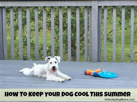 how to keep dogs cool in summer how to keep your cool this summer