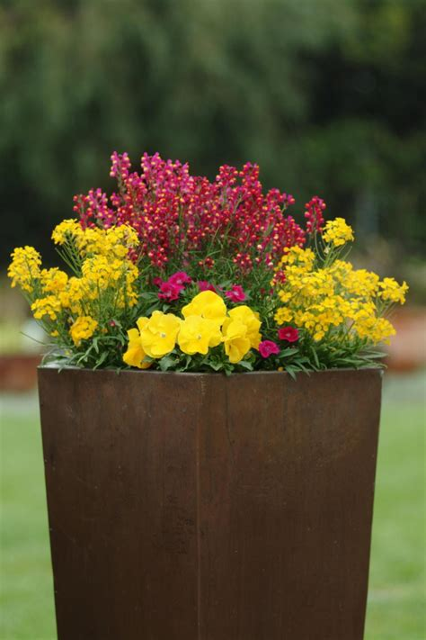 fragrant container plants team inspired plant color combos hgtv