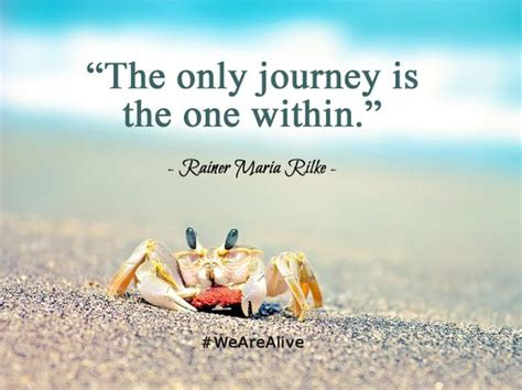 the light within my journey home to the white buffalo books the only journey is the one within picture quote by