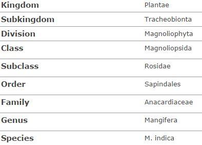 scientific name of what is the scientific name of mango quora