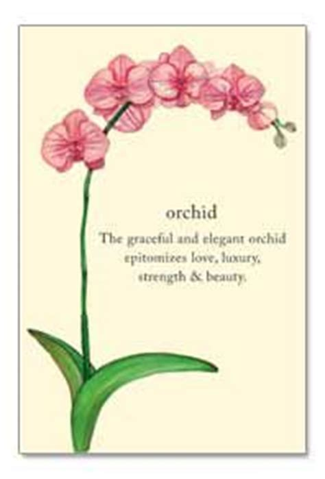 150 best orchid quotes images 150 best orchid quotes images on orchids bible quotes and bible scriptures
