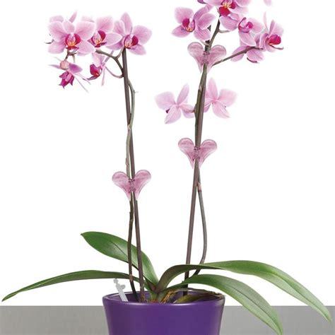 orchidea significato dei fiori significato dei fiori orchidea significato fiori