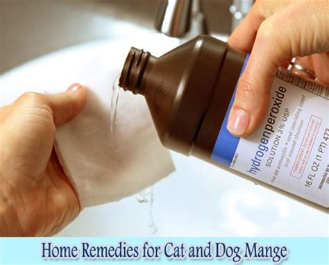 mange home remedy home remedies for cat and mange