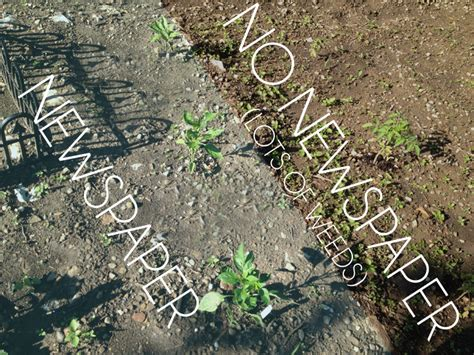 how to prevent weeds in your garden without chemicals our little apartment