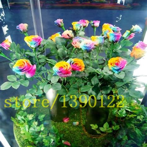 100 flowers from the 100 rose seeds flower as the best gift for friend holland rainbow rose seed flowers lover